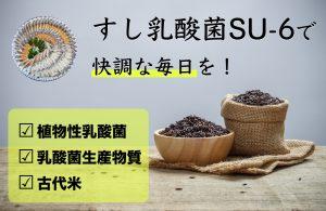 すし乳酸菌SU-6/オリジン生化学研究所 購入ページ